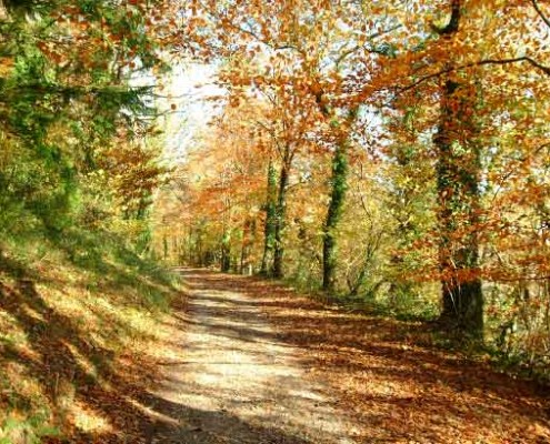 Autumn trees on the Flete drives