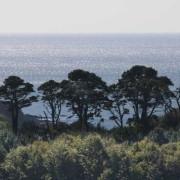 Pamflete pines
