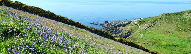 bluebells on coastal footpath Flete Estate
