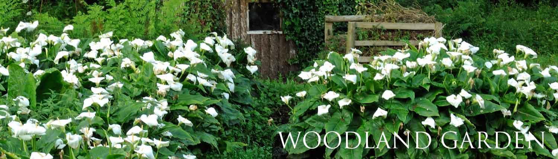 Mothecombe bog garden