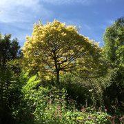 Mothecombe garden in spring