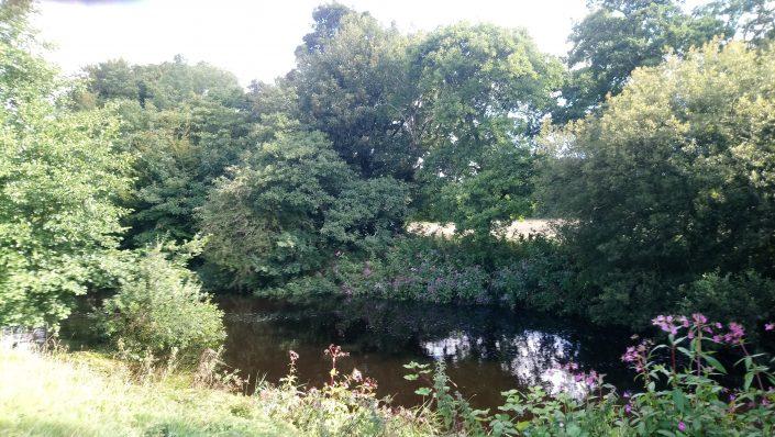 riverbanks, erme estuary, flete estate, fishing, conservation, countryside, natural beauty
