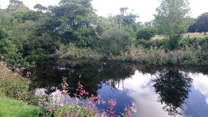 The river Erme, flete estate, tranquility