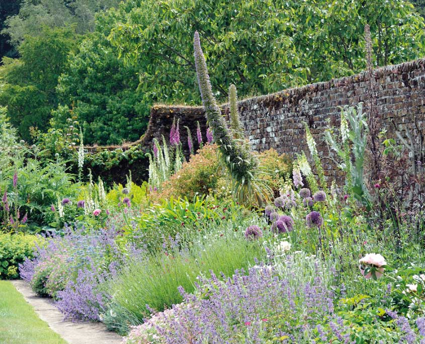 June border flowers in Mothecombe walled garden