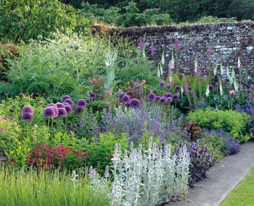Mothecombe gardens with purple allium