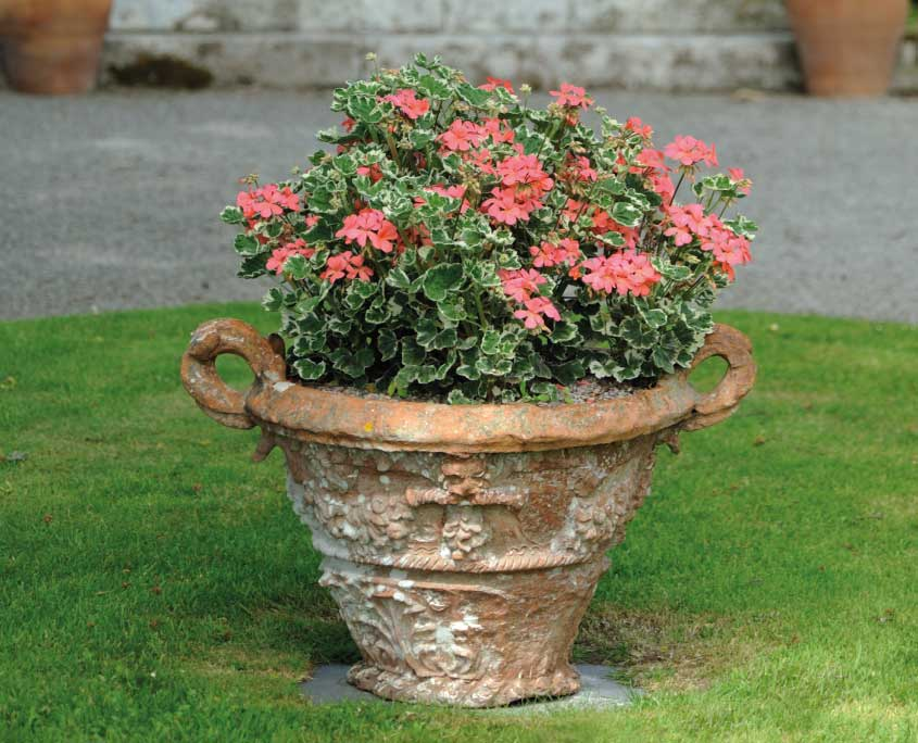 Urn of Frank Headley geraniums