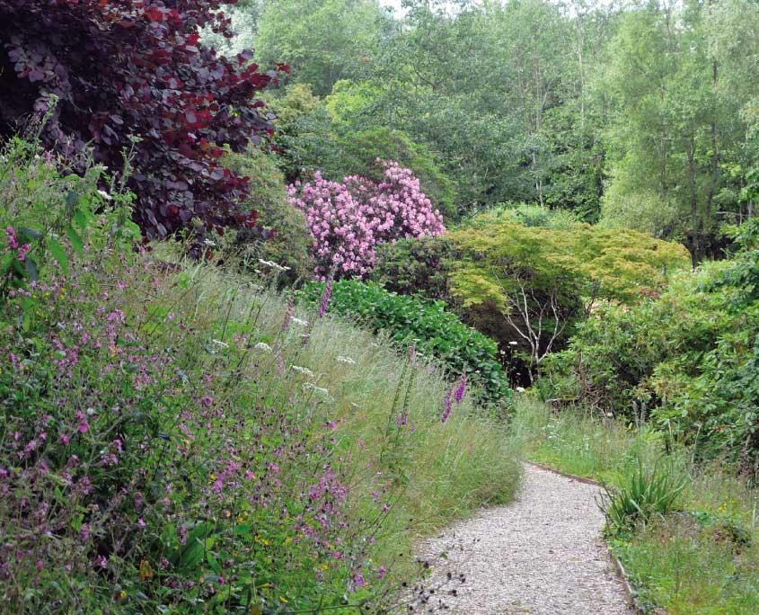 Wild flowers Mothecombe garden