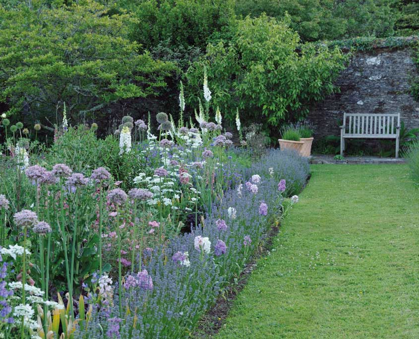 Lavender, mauve alliums, white foxgloves