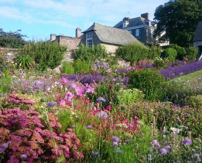 Mothecombe Bee Garden, conservation, insect friendly, nature, cottage garden planting