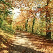 Autumn drives to Efford House