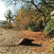 Pamflete beach in Autumn