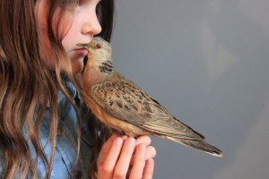 Girl with a brown bird