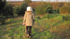 Millie at Christmas tree farm