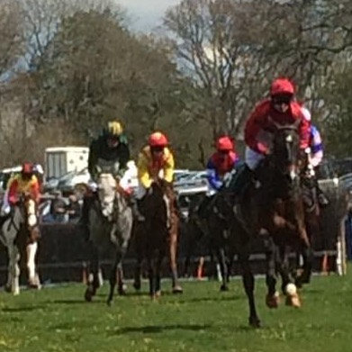 Horses at Flete point to point