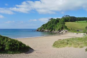 Marram grass on Mothecombe beach