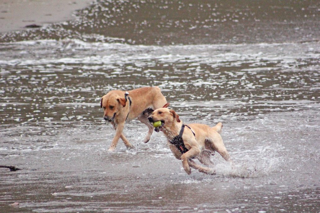 Dogs at Mothecombe beach, flete estate, dog friendly