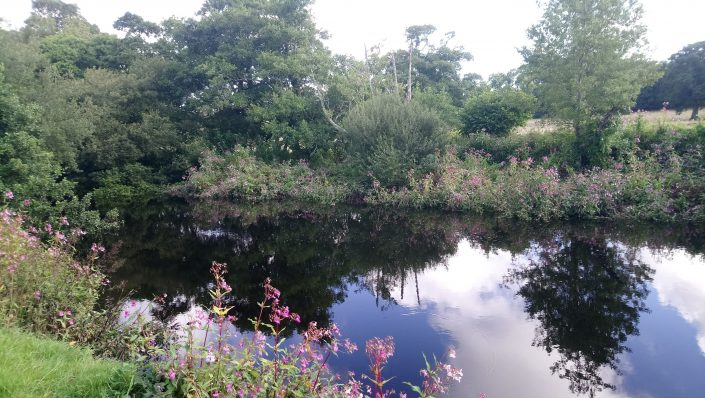 The river Erme, flete estate, tranquility